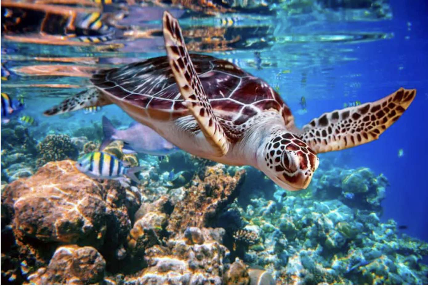 Sea Turtle Accidently Eat Plastic Trash Mistaking it For Food in the Ocean Every Year – California Pretty Magazine